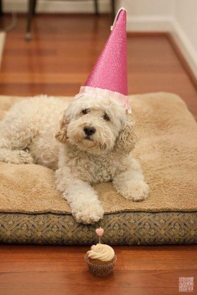doggie bday cake 3