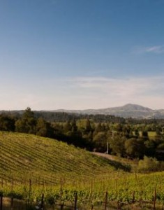 {Sonoma} A Trip Down the Wine Road