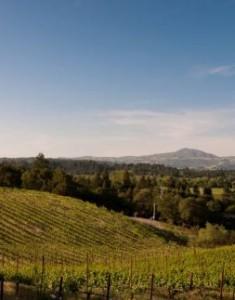 {Sonoma} A Trip Down the Wine Road