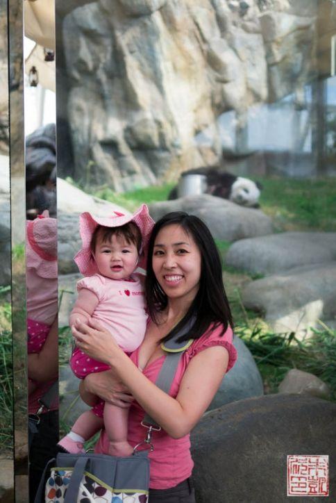 ocean park panda