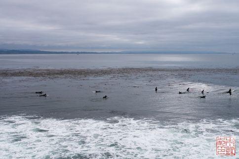 santa cruz surfers