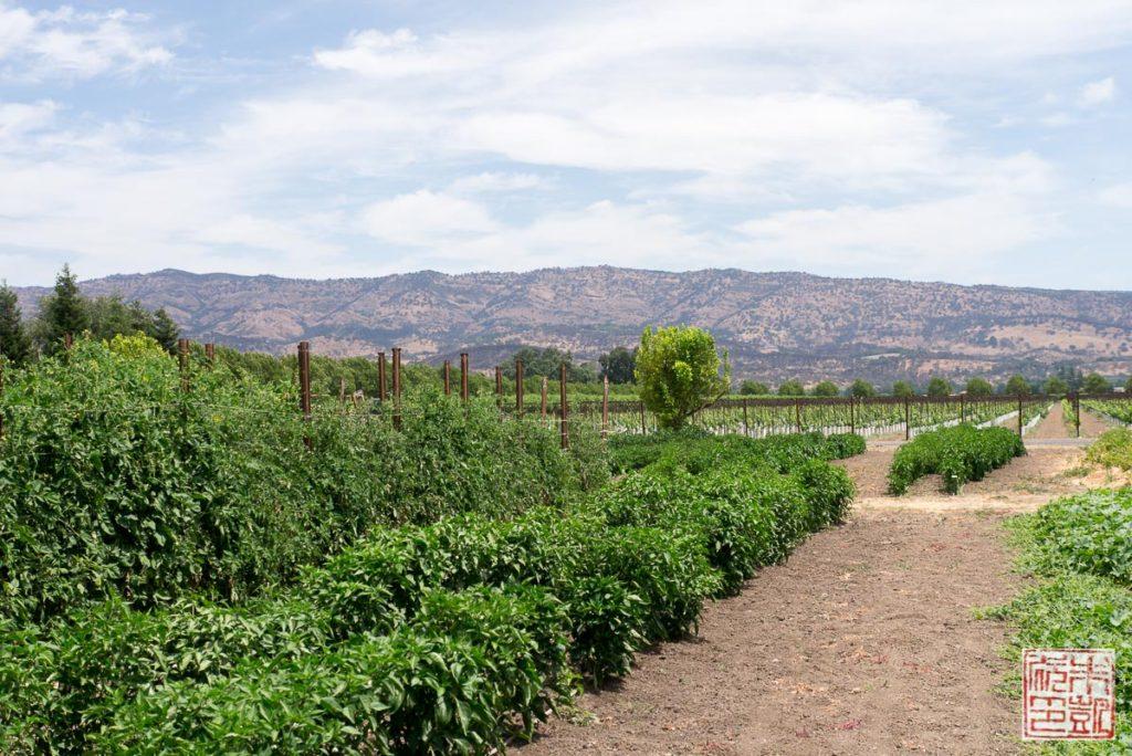 Trefethen Garden Vista