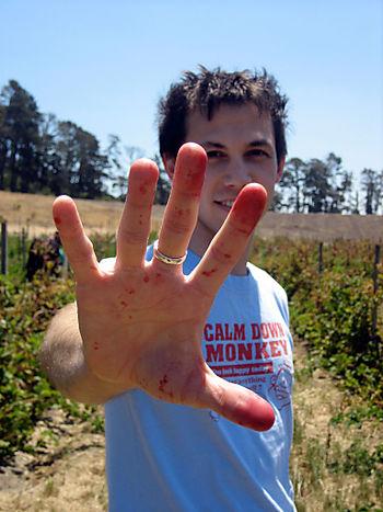 Swanton-berry-hand