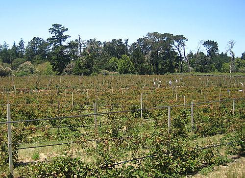 Swanton-fields