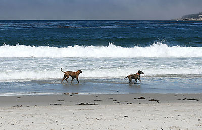 Carmeldogs