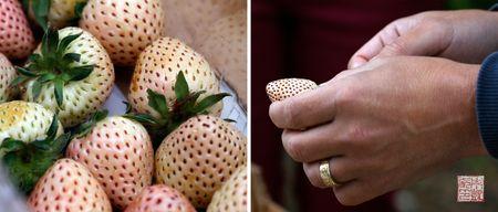 Whitestrawberries
